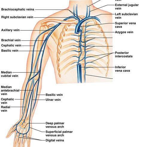 Arterial Upper Extremity Exams – Vascular Center of Michigan